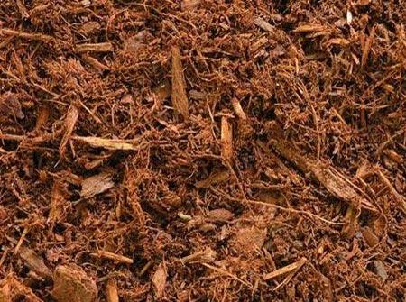 Natural Red Hemlock for sale